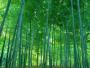 描写竹子的句子和段落|描写竹子的经典句子